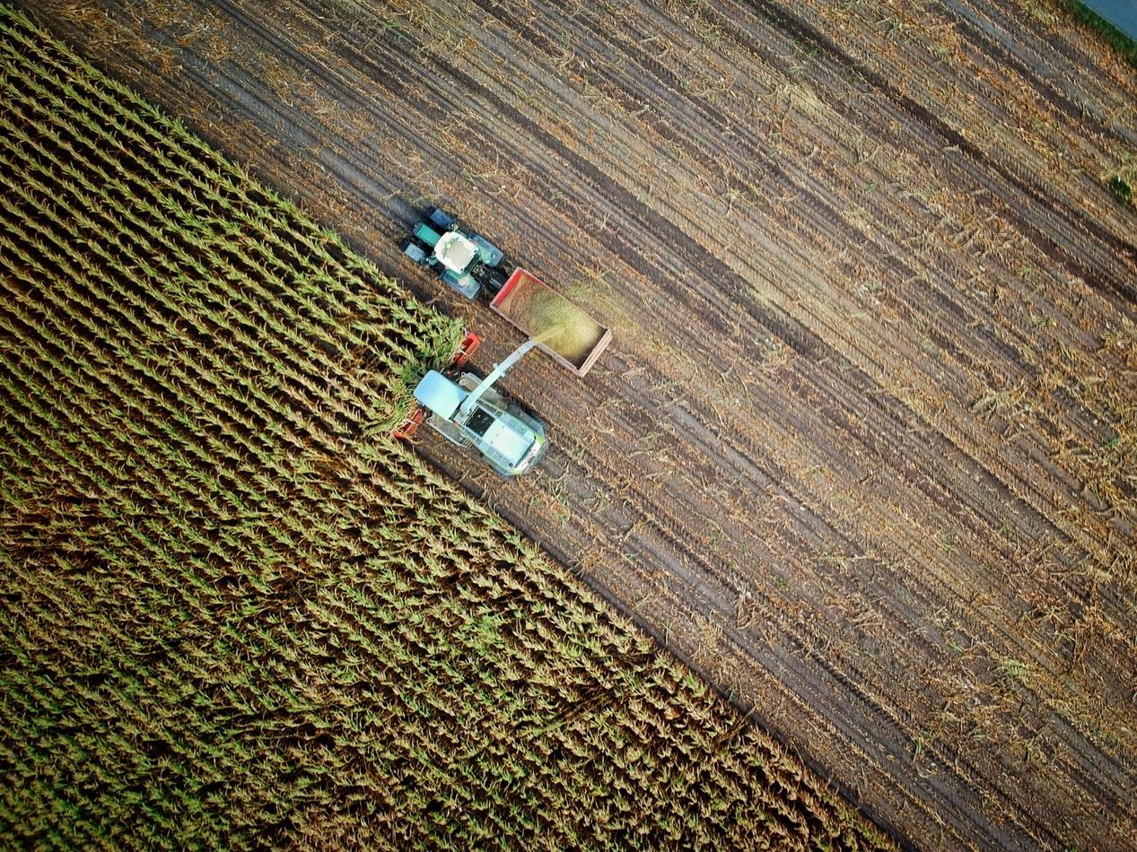 Un champ de blé à Warendorf en Allemagne