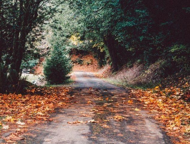 A l'automne, les feuilles tombent des arbres en abondance
