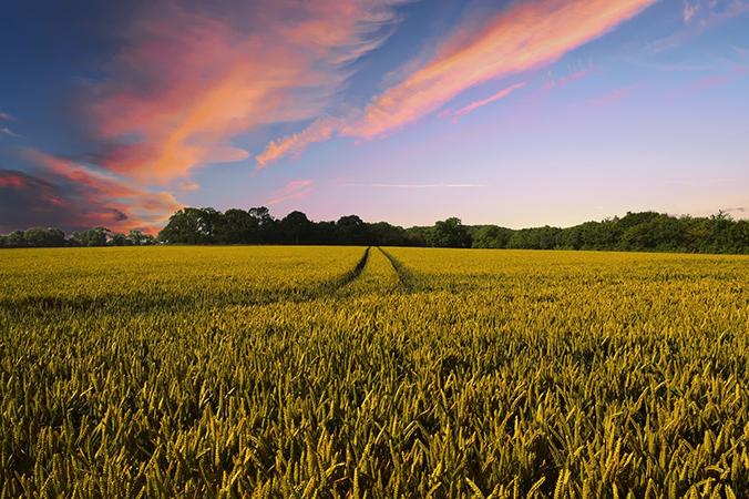 Agriculture Zéro Pesticide Bretagne