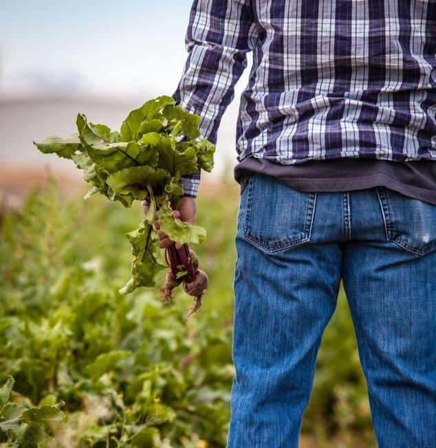 Un agriculteur tenant une bettrerave en main.