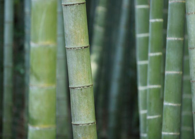 Des chercheurs de l'Université du Maryland ont créé un matériau exceptionnellement solide et léger à partir du bambou chauffé aux micro-ondes.