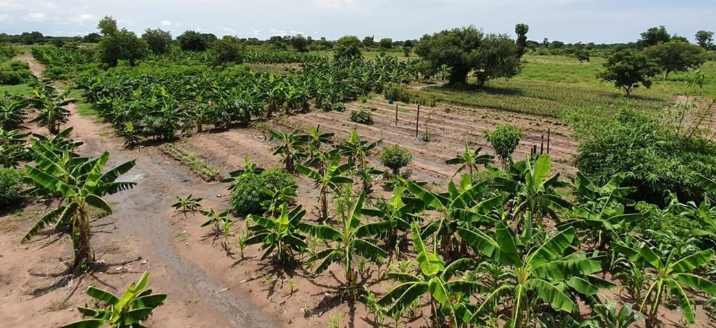 La ferme Nova Agrico de Kam Rigne Laossi, jeune agronome tchadien (Photo Crédit : Kam Rigne/Facebook).