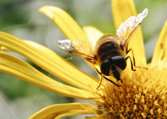 Une abeille sur une fleur.